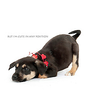 Sacramento city shelter dogs on February 16, 2012..