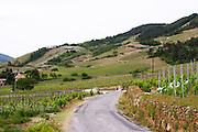 vineyard winding road through vineyards cornas rhone france