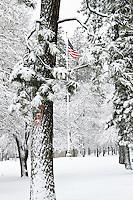 American flag in a tree frame