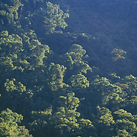 Cloud forest clings to upper Amazon cliffs above Rio Huabayacu.