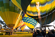 Hot Air Balloons preparing to take off at Surise from Yountville, Napa Valley, California