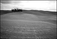 Italie - Toscane - Region de Sienne - Bouquet de cyprès. // Sienna province<br /> Tuscany - Italy