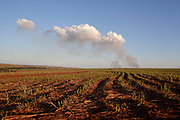 Cropped sugarcane field with burning cane in the background. Brazil is the largest producer of Sugar and Beef, then second for Soya and third for Maize. Many of the farms are in the state of Mato Grosso and Mato Grosso do Sul, they are often enournmous, stretching for miles kilometres. A lot of the crops are processed on site and kept in large warehouses or silos.