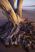Tree trunk, Big Talbot State Park, Florida<br />
