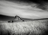 Infrared, old barn in the wheat fields of Palouse, Washington