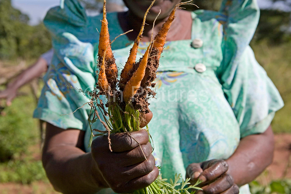 Gertrude Nyenje on her husbands farm with a bunch of 1month old carrots. Kulika has trained the family in sustainable organic agriculture.