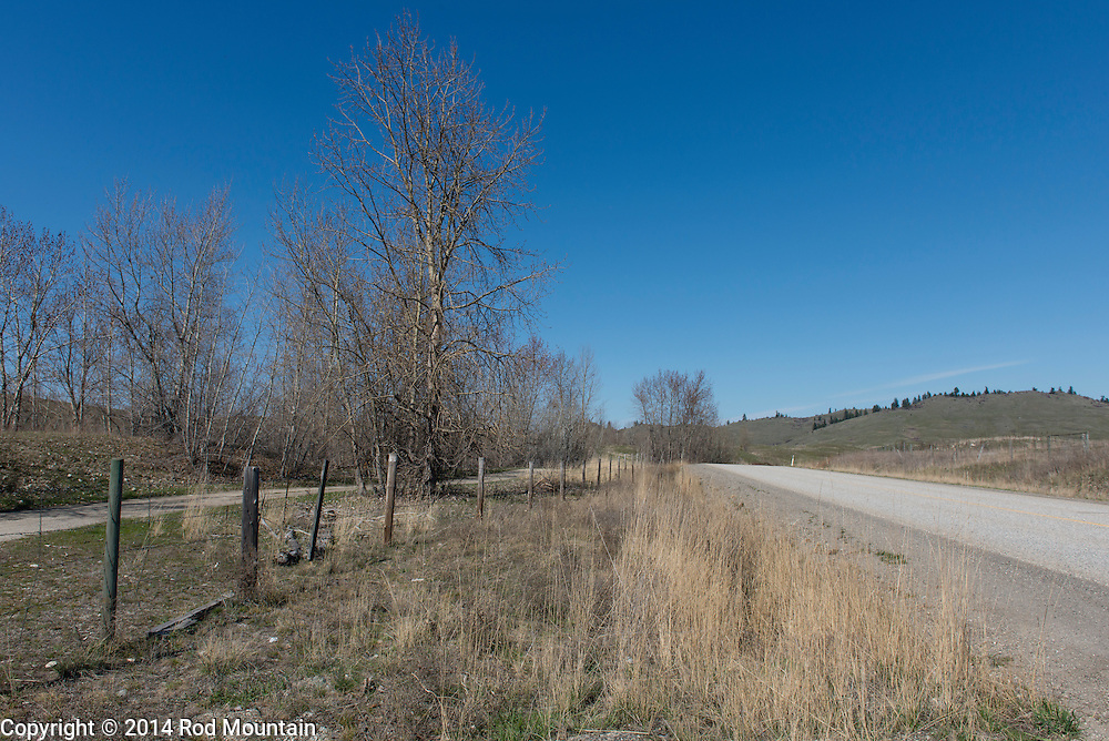 In the Okanagan, the trees and grass are looking very dry in the spring time.