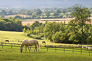 Horses and sheep grazing at Chastleton in the Cotswolds, England, United Kingdom.