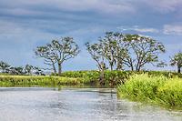 Palmetto plants line the edge of a coastal salt marsh hammock