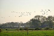 Nederland, Ooijpolder, 6-11-2020 Het gebied van de voorgenome bouw van een mega zonnepark van 180 ha. door de gemeente Berg en Dal . Het mega zonneveld moet tussen Leuth, Kekerdom en Millingen aan de Rijn komen en veel inwoners vinden de plannen te ambitieus en de oppervlakte groot . De Ooijpolder is een groot gebied langs de Waal tussen Nijmegen en de Duitse grens. Delen ervan zijn door staatsbosbeheer beheerd natuurgebied waaronder de millingerwaard en het maakt deel uit van de gelderse poort . Foto: ANP/ Hollandse Hoogte/ Flip Franssen