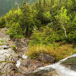 A small waterfall in  Ammonoosuc Ravine below New Hampshire's Mount Washington.  Ammonoosuc River headwater stream.