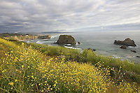 Wildflowers bloom on cliffs high above the California Coast.