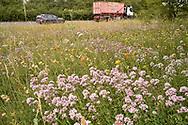 Roadside verge - natural vegetation