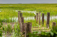 A Snowy Egret looks out over a coastal salt marsh from the piling of an old dock.