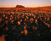 Navajo horse on short grass prairie near Bidahochi, Navajo Reservation, Arizona.