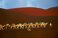 Espagne, Iles Canaries, Ile de Lanzarote, Le Parc National de Timanfaya, excursion en chameau sur le volcan // Spain, Canary islands, Lanzarote, National Park of Timanfaya, excursion on camel to visit the volcano