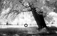 A single car tyre hanging from a tree