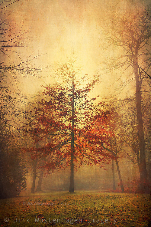 Maple tree with red foliage on a misty autumn morning - photograph edited with texture overlays