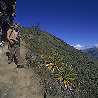 Cordillera Vilcabamba, Andes Mountains, Peru. Ben Wiltsie on ancient Inca trail leading to silver mines and former city of Corihuayrachina on Cerro Victoria.