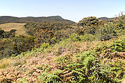Montane grassland and cloud forest environment Horton Plains national park, Sri Lanka, Asia