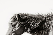 Tracie Spence's fine art photography series of The Spanish Wild Mustangs.