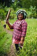 Woman in plantation fields, Java, Indonesia