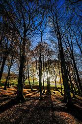 A deciduous wood in autumn in the Scottish Borders<br /> <br /> (c) Andrew Wilson | Edinburgh Elite media