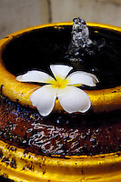 Water fountain with frangipani flower, Bangkok Thailand