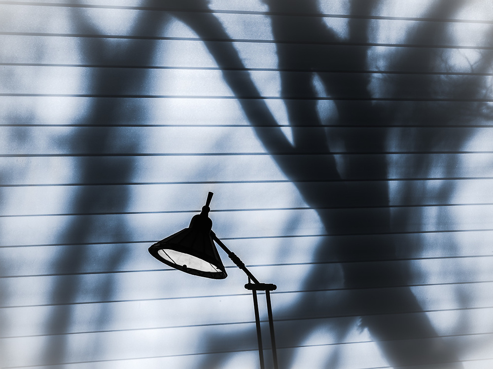 Living room lamp and tree shadows on window blinds, private residence, autumn, December, Tacoma, Washington, USA