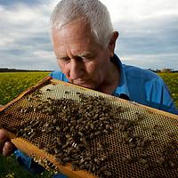 Apiarist Peter Davis checks his bees, Kangaroo Island, SA.