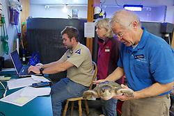 Bob Prescott, Michael Sprague & Judith Rhome, Examining Olive Ridley Sea Turtle, Sanctuary Director, Welfleet Bay Wildlife Sanctuary, Audubon