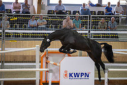 004, Miss Holivia VDL<br /> Nationaal Kampioenschap KWPN<br /> 3 jarige springmerries<br /> © Hippo Foto - Dirk Caremans<br />  15/08/2020
