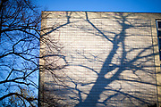 Shadow of a tree ona building in the city center of Frankfurt am Main.