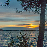 A white pine tree grows beside Lake of the Woods, Ontario, Canada.