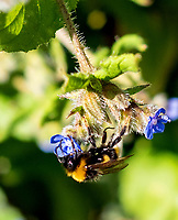 A VIRAL disease that paralyses bees has been sweeping through  the honeybees  populations around  the world ,the  disease is reported to be spreading in the uk,Severe outbreaks of Chronic Bee Paralysis (CBP) can lead to the destruction of whole colonies