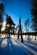 Afernoon winter shadows fall near Inari, Lapland, Finland.