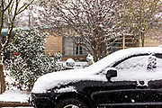 The week of February 15 San Antonio, Texas experienced an uncommon snow event. This shot is from Meadowood Lane near McCullough Ave.