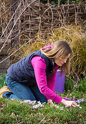 Hand weeding a border in early spring