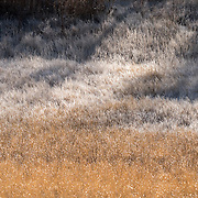The morning sun melting away the frost from the grasses in a meadow. Bosque Del Apache NWR. New Mexico.