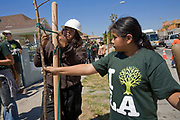 A young girl helps stake a tree at a tree planting celebrating Earth Day in South Central Los Angeles. LA Conservation Corps joins with community volunteers to plant trees along West Adams and Central Avenue near a new Fresh and Easy Market that plans to open on the corner. Los Angeles, California, USA.