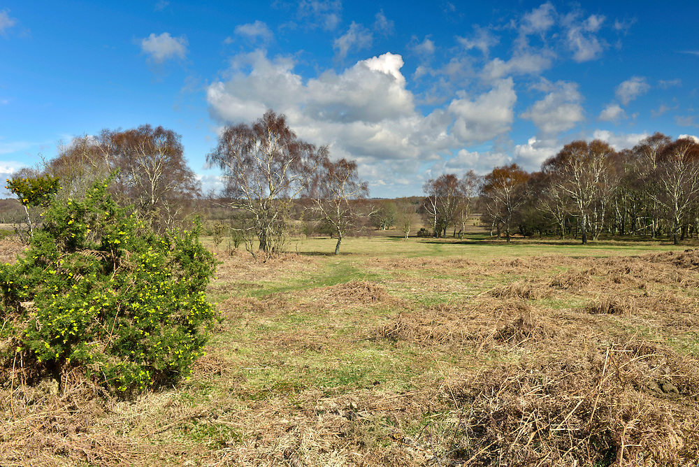 Matley Heath in the New Forest near Lyndhurst, Hampshire