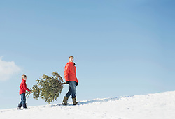 Father and son carrying spruce, Bavaria, Germany