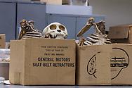 Skull and bones at Tulane Univeristy's Natural History Museum.