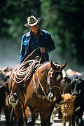 """LIVINGSTON, MT - AUGUST:  Robert Redford leads a cattle drive during the filming of """"The Horse Whisperer"""" in 1997. (Photo by John Kelly/Getty Images)"""