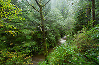 Scenic image of Oswald West State Park, Oregon, during an intense fall storm.