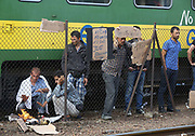 Migrants hold up messages asking for help at Bicske train station, Hungary in a tense stand-off between police and migrants which continues into a second day. On Thursday, police let the migrants board the train in Budapest but then tried to force them off at a refugee camp to the west of the capital.