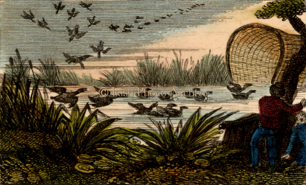 A Duck Decoy showing the mouth of the tunnel. Wild duck were decoyed into the mouth of a net covering a curving ditch or 'pipe'. A dog was trained to drive birds to narrow end of the tunnel where they were caught and killed. A common practice on the Lincolnshire Fens and the Norfolk Broads. Most of the birds were sent to London for sale. From 'Scenes in England' by the Rev. Isaac Taylor, London, 1822. Hand-coloured engraving.