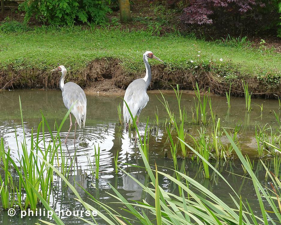 WWT Wetland Centre, Barnes