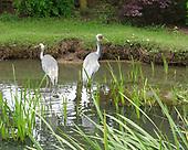 WWT Wetland Centre