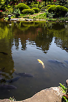 """Kansen-en means """"sweet spring garden"""". This comes from the fact that the garden's spring water was sweet and suitable for tea.  The garden is typically Edo style, that is to say a strolling garden encircling a gourd shaped pond.  This pond is called Yamabuki-no-ido  in the middle of the garden, surrounded by flowering shrubs.  Kansen-en Garden was once the domain of the Shimizu Tokugawa Shoguns - a prominent family of the Edo Period.  After the Meiji Restoration the land was transferred to Marquis Souma."""